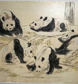 neu - Walter Lindner - Pandabären