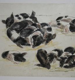 Original - Walter Lindner - Wildschweine